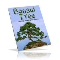 Bonsai Trees: Growing' Trimming' Pruning' and Sculpting 2