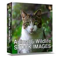 Animal and Wildlife Stock Images 1