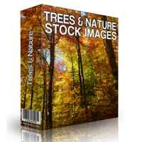 Trees and Nature Stock Images 1