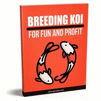 Breeding Koi For Fun And Profit
