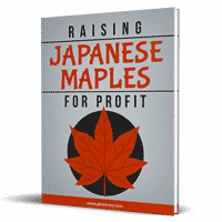 Japanese Maples For Profit