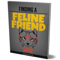 Finding A Feline Friend